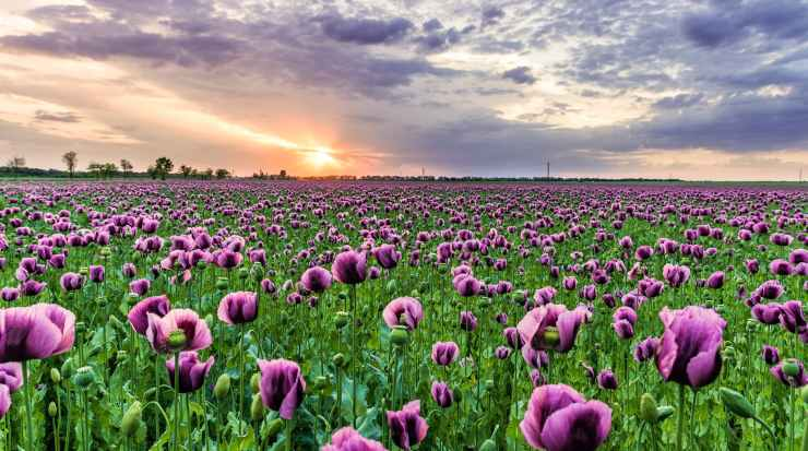 photography of field of purple flowers