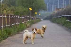 animals canine couple daylight